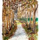 Acquerello - Viale di ippocastani a Villa Demidoff silvia ricotta