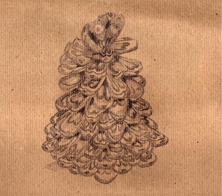 disegno a matita Silvia Ricotta