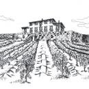disegno a china vigna silvia ricotta