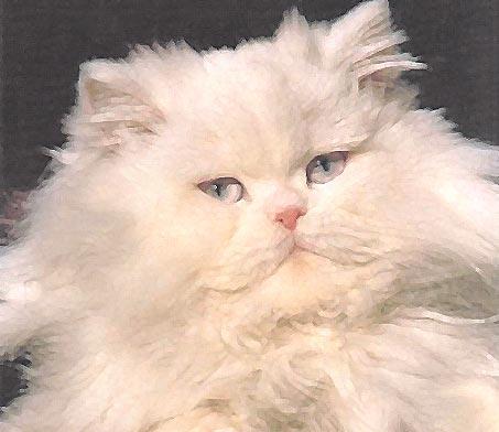 gatto perfetto