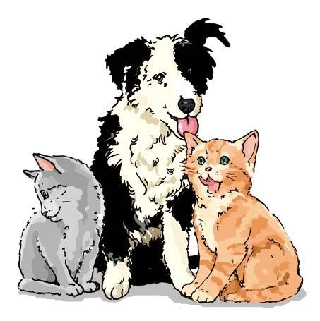 Cane e gatti