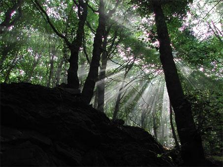 alberi in Secchieta Silvia Ricotta