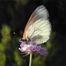 fotografia farfalla silvia ricotta