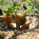 uccellini fotografia silvia ricotta